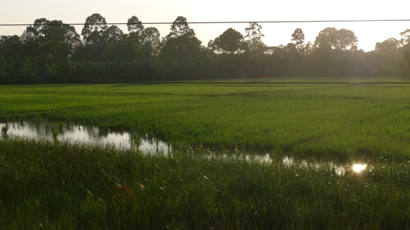 The train ride to Thailand's Eastern Coast was a delight of green through a countryside that looked considerably better-manicured than all other countries we had previously visited